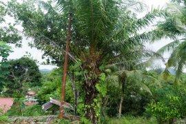 Evapotranspirasi tanaman sawit di daratan kepulauan