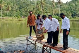 Waktu kunjungi budidaya ikan tawar Rao Selatan Pasaman Menteri KP apreasiasi nilai produksi bisa Rp1 triliun/tahun (Video)