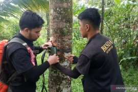 Ungkap makhluk misterius resahkan warga Agam, BKSDA Sumbar pasang kamera trap  (Video)