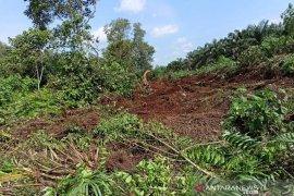 Petani Kampar dan pihak swaata kelola hutan tanpa membakar