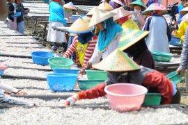 Harga ikan teri asin di Pulau Pasaran turun tipis
