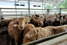 Dompet Dhuafa Farm siap hadirkan hewan kurban berkualitas di Lampung