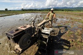 Parimo  siapkan 100 Ha lahan padi ladang program Upsus Pajala