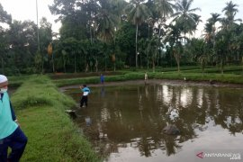 Permintaan bibit ikan nila di Agam meningkat sejak Ramadhan