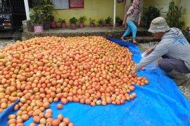Dinas Pangan prioritaskan mutu produk pangan segar asal tumbuhan