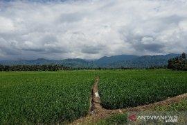 Realisasi produksi padi di Parigi Moutong capai 313 ribu ton tahun 2020