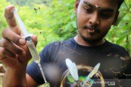 Budi Daya Madu Kelulut Di Aceh Besar