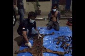 Tim KLHK-Polda Bengkulu tangkap penjual kulit dan tulang harimau sumatera