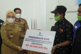 Bank Sulselbar salurkan KUR untuk petani