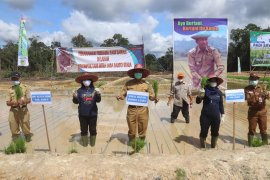 Barut tanam perdana padi sawah organik Inpari 30
