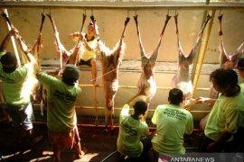 Sebanyak ini target hewan kurban dikumpulkan ACT Sumbagteng pada Idul Adha 2021