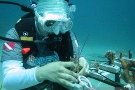 BNI tanam ribuan terumbu karang di Sulut untuk rayakan HUT ke 75