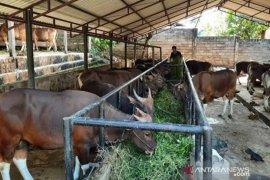 Permintaan hewan kurban di Riau meningkat meski pandemi melanda