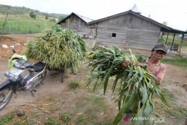 Pemerintah gelontorkan dana senilai Rp298 triliun ke daerah tertinggal hingga 2019