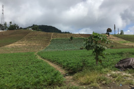 Lahan pertanian holtikultura di kawasan Rurukan Tomohon