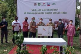 SKK Migas - PT CPIdukung keselamatan gajah sumatra, sistem agroforestridiluncurkan di Bengkalis