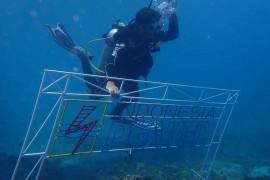 PLN Group bersama BPSPL Denpasar dan Pokmaswas tanam 1.000 bibit karang di laut Pandanan KLU