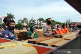 Pelaku ilegal logging di Dumai diringkus Page 2 Small