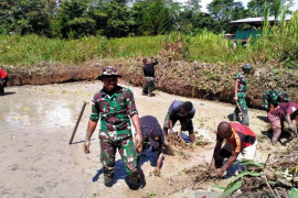 Prajurit TNI bersama warga Papua di perbatasan budidaya ikan nila