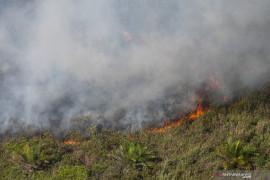 Kebakaran Lahan Perkebunan Kelapa Sawit di OKI Page 6 Small