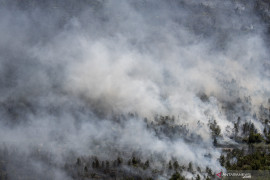 Kebakaran Lahan Perkebunan Kelapa Sawit di OKI Page 2 Small