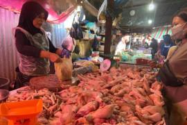 Sejumlah peternak ayam di Palembang gulung tikar