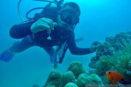 Yuk... menyelam, wisata bawah laut Pasaman Barat begitu indah (Video)