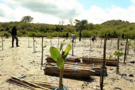 Traveloka menggagas penanaman 10.000 batang bakau di Mandalika Lombok