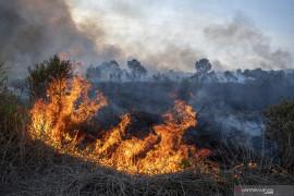 Kebakaran Lahan di Ogan Ilir Page 2 Small