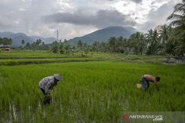 Realisasi Kredit Usaha Rakyat Sektor Pertanian Page 1 Small