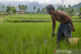Realisasi Kredit Usaha Rakyat Sektor Pertanian