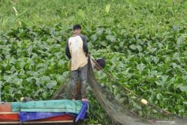 Pemprov Sumsel canangkan  rehabilitasi 750 hektare hutan mangrove