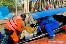 Basarnas temukan jasad balita tiga hari  tenggelam di Banyuasin