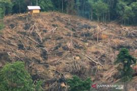 Polres Soppeng tetapkan anggota DPRD sebagai tersangka pembalakan hutan