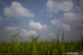 Latihan Terjun Garuda Airborne Page 2 Small