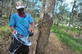 Pemkab Muba dorong petani produksi karet bersih