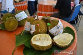 6.500 buah durian dilelang laku terjual Rp42 juta