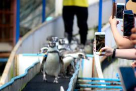 Thailand lockdown, penguin kesepian kangen pengunjung