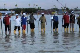 Sambut HUT RI ke-76, Pelindo IV tanam mangrove