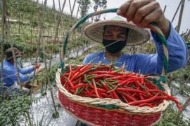 Harga pangan sepekan terakhir dari beras hingga cabai rawit stabil