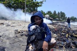 Limbah Minyak Cemari Laut Lampung Page 1 Small