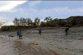 BRGM: Pulihnya ekosistem mangrove dukung penurunan emisi karbon