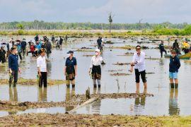 President, ambassadors plant mangroves in N Kalimantan's Tana Tidung