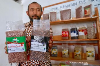 Indonesia ekspor beras Pandan Wangi asal Cianjur ke Singapura