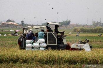 Sektor pertanian lokomotif penyelamat dari resesi