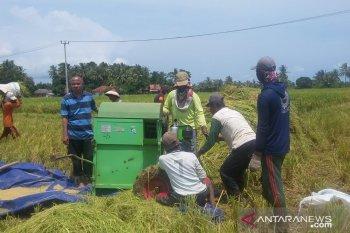 Antusiasme petani Kabupaten Pandeglang melakukan panen raya padi di tengah mewabahnya Covid-19