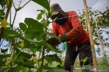 Jaminan akses pangan di tengan wabah  COVID-19