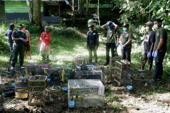 56 burung dibebasliarkan di Taman Nasional Bukit Barisan selatan