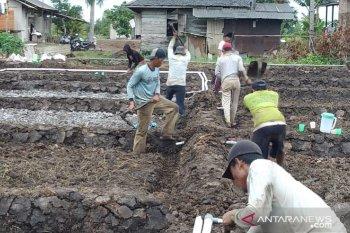 Demfarm Desa Puntik Dalam ditarget panen 6 ton per hektare