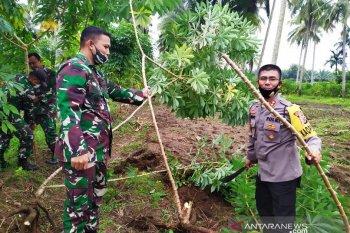 Kodim Nagan Raya motori penanaman ubi kayu untuk ketahanan pangan